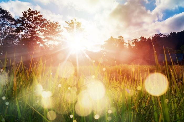 ひとりひとりが幸せを感じること。  日々の喜びに心躍り湧き上がること。それが真の豊かさで贅沢なことではないでしょうか?あなたの目の前の世界をよく見て、心の声に耳を傾けて。 自分に誠実に。 今この瞬間を味わおう。忘れてない?この世界はとても美しいのです。  心の望みに従うことは、もしかしたら、私たちにとっては少し勇気がいることなのかもしれません。しかし、ひとりひとりが内なる欲求に気づき声をあげ行動するタイミングが今だよ、と星は囁き私たちをそのように促しています。さぁ、あなたにとって新しい世界の幕開けの夏。新しい世界を感じましょう。  それではみなさま  素敵な夏至をお迎え下さい 星に願いを、月に祈りを。