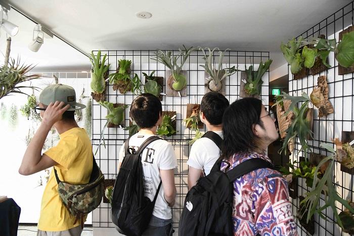 特定のジャンルにこだわらず、多彩な植物を暮らしの中で楽しんで欲しいというnecomoss。  今回はティランジア、ビカクシダ、ミニ盆栽を持ってきていました。  カッコいい流木に着生させたティランジアや丁寧に手入れされたミニ盆栽を手に取る人も多くいましたが、中でも目を引いたのがビカクシダ。  タイまで行って厳選してきたという姿のよい株や、レアな形質を持った株などおすすめのビカクシダが目白押しのブースでした。  また、ビカクシダ各種の胞子も販売しており、500円というお手頃価格もあってか、なかなかの売れ行きでした。