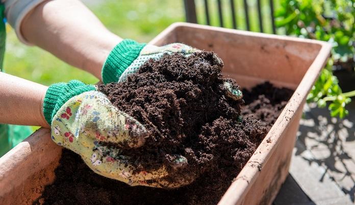 肥料の与え過ぎ、または肥料切れで生じることが多いので、肥料は適正に与えるようにします。畑やプランターの水はけをよくし、過湿を避けましょう。 風通しをよくし、日光不足にならないように注意しましょう。
