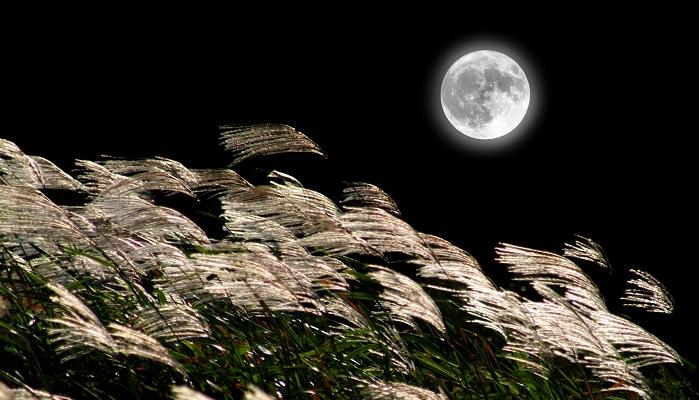中秋(ちゅうしゅう)の名月とは、旧暦8月15日の十五夜にお月見をするならわしです。  昔の日本では月の満ち欠けと太陽の動きを基に作られた太陰太陽暦という暦を作り、農業や暮らしに役立てていました。いわゆる旧暦です。  旧暦では7,8,9月を秋としており、その真ん中の日の8月15日を「中秋」と呼び、またその晩に上がる月のことを「中秋の月」と言っていました。  中秋の名月の別称である十五夜(のお月さま)もこの旧暦の頃の名残です。  旧暦は毎月1日は新月でなければなりませんでした。そのため毎月15日には満月か、ほぼ満月に近い月が見られ、1ヵ月が29日ないし30日あったのです。(月の満ち欠けの周期は29.5日)  さらに、初秋は台風や雨も多いですが、そのあとは徐々に空気も冷たくなってきて、秋晴れが続きます。空も高くなり、月もきれいに見えるので、中秋の名月と呼ばれるようになったそうです。  また、旧暦と新暦には1カ月~2か月のズレがあるため現在の中秋の名月は9月だったり10月だったりするんですね。  平安時代、中国から遣唐使によってもたらされた「望月」という月を見る催しが平安貴族に浸透し、観月の宴が催されるようになりました。  それが農村を中心に庶民の間で行われていた作物の収穫祭と結びついていきます。豊かな実りの象徴として十五夜を鑑賞し、お供えものをして感謝や祈りを捧げるようになりました。