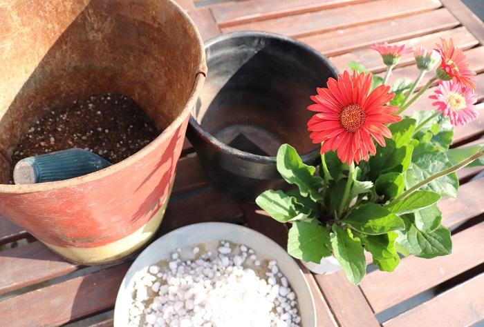 ガーデンガーベラの苗(今回は色違い2ポット) 鉢 鉢底ネット 鉢底石 草花用の培養土(肥料入り) 土入れ ハサミ