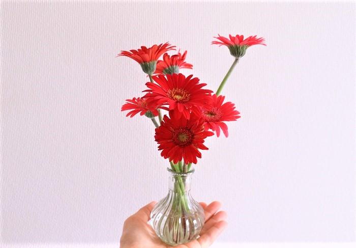 咲いた花を切り花用にカットしても、少しすると次々に花が上がってきます。