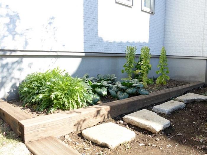 奥様の趣味の家庭菜園スペースも周りのグリーンと調和して、さらに素敵になりました。すくすくと育つリーフ類も気持ち良さそうです。