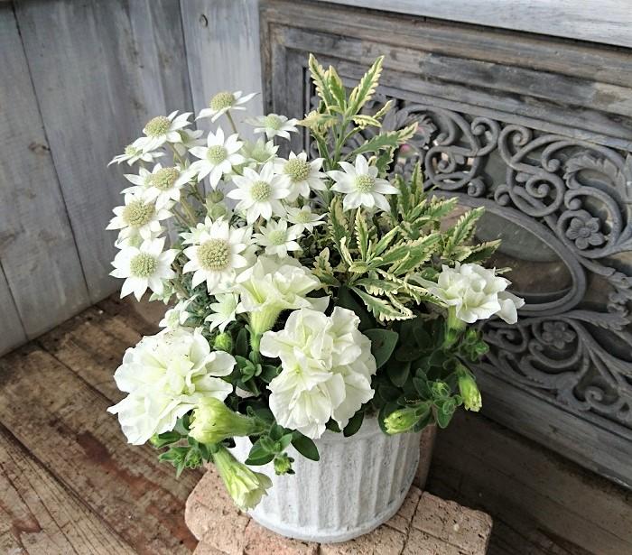 自分が作った寄せ植えを見て、お客様が喜んでくださったときが本当に嬉しくて、この上なくやりがいを感じます。