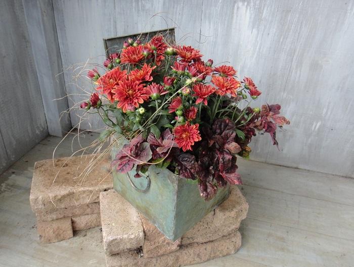 植物の植生(好きな環境)を意識しながら、鉢の中でひとつの世界を作ることができることや、狭いスペースでも楽しめることが魅力だと思います。