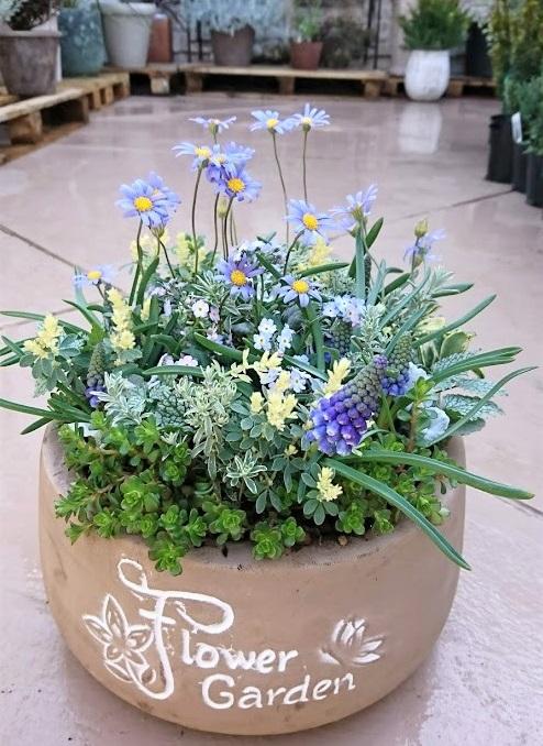 お店の商品なので、誰が見てもきれいだな。お客さんが買いたいな。と、思うような寄せ植えやハンギングバスケットを作ることにこだわっています。  とても可愛い花なのに、合わせ方がわからないことで売れ行きがいまいちな時があるのですが、そんな時は、その花を積極的に使って可愛い寄せ植えを作り、お客さんにその花に興味を持ってもらえるようにしています。また、新しい鉢などが入荷してくると、どの花を合わせたらこの鉢が引き立ち、買いたいと思ってもらえるかな。と常に考えています。