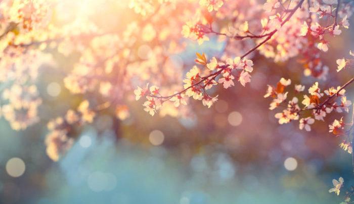 3月は春最後の月。弥生です。「木草弥生ひ茂る月」「きくさ いや おひ しげる づき」という言葉が起源だと言われています。「弥(いや)」は、「いよいよ」という意味があり、草木がいよいよ生い茂ってくるという意味になります。  別名・建辰月(けんしんげつ)、晩春(ばんしゅん)、殿春(でんしゅん)、竹秋(ちくしょう)