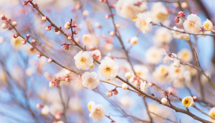 2月は如月です。衣更着(きさらぎ)とも言いますがこの言葉は着物を更に着る(重ね着をする)という意味があります。寒さがのこる月であることがわかります。  別名建卯月(けんぼうげつ)、仲春(ちゅうしゅん)殷春(いんしゅん)、星鳥(せいちょう)、他