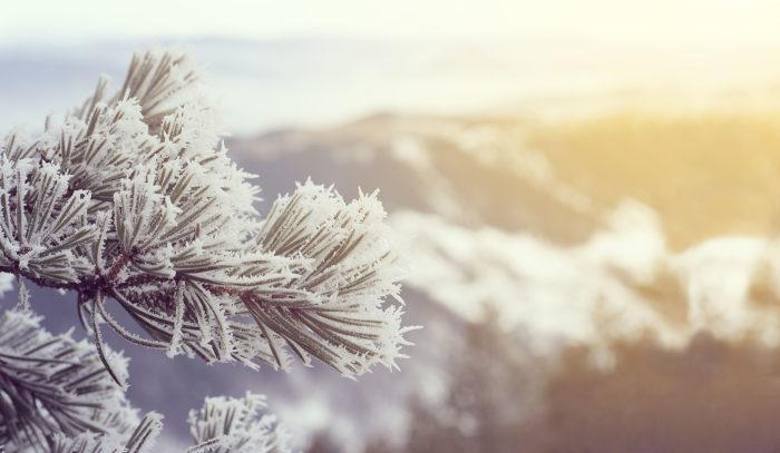 1月は睦月です。睦には「睦び、親しくする」という意味合いがあります。正月に家族や親類が一堂に会して新年を寿ぎ、お祝いする月です。  別名・建寅月(けんいんげつ)、初春(しょしゅん)、新春(しんしゅん)、月正(げっせい)