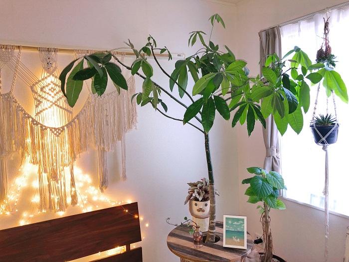 Photo by:市原璃彩 ベランダで子供と一緒にミニトマトなどの野菜を育てたり、室内では観葉植物をたくさん育てています。生活の中にいつも植物があるので、子供も自然に植物が好きになっていて、まだ幼いのにアジサイの花芽が出てきた時も、「これ、アジサイだね。」ってわかっちゃうくらい植物に詳しいです(笑)。 花も好きで育てていますが、雑草みたいな素朴な植物も大好きです。小さい頃から野に咲く花やつくしなどとふれあって育ちました