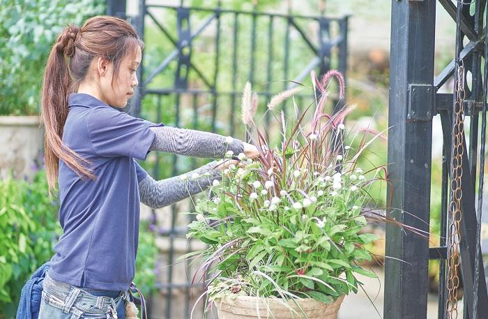あとは、リーフ類が好きで、いつもリーフを多めに使います。特に、グラス系のリーフが好きで、グラスを使って立体感のある寄せ植えをよく作ります。コクリュウ、カレックス、穂がついているグラスなどが大好きです。いろんなグラスを集めてグラスだけで寄せ植えを作ったりもします。グラスを使うと、夏は涼し気に、秋は秋らしさを演出することができておすすめです。