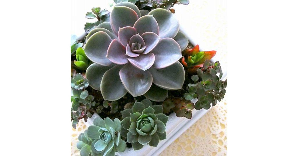 割れ鉢で作る多肉植物のミニチュアガーデン, 花の文化園