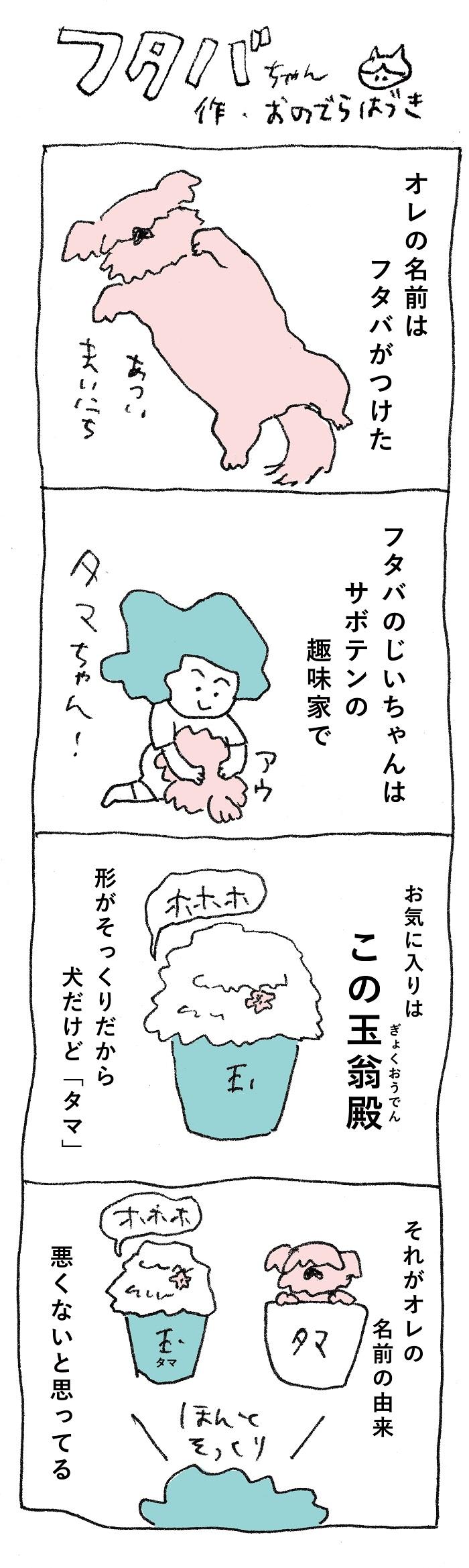 猛暑が続きますね。  ネットニュースで日本の熱中症についてよく見るようになり、心配です。  実はセブでは熱中症はまだメジャーではなく、日射病という言い方しかないそうです。  とはいえ、今年の夏は日本よりも涼しいセブ島。今は雨季なので、夕方ザッと雨が降ると途端に冷え込み、長袖を羽織るぐらい!  昼間暑くて夜寒いので体調を崩す人も多いのですが(私と娘も1週間40度の熱が出ました......)、セブの人たちはさすが海と暮らしているだけあって、風邪をひいたときは海に入るのだとか。  「鼻が出たり喉が痛かったり、咳がある時は海に入るの」。実際試してみましたが、なんと熱が下がりました。海の力すごい......  さて、今回登場した玉翁殿は白い毛がモフモフしているマミラリア属のサボテンですが、フタバのじいちゃんはサボテンの趣味家なので、じいちゃんのところにはサボテンの温室があり、その中にはタマちゃんサイズの玉翁殿がありました。  フタバは赤ちゃんのころからじいちゃんの所に遊びに行ってはふわふわのサボテンを見ていたのです。タマの名前はじいちゃんがつけたのですが赤ちゃんのタマと赤ちゃんのフタバは一緒に大きくなって来たんですね。  *  セブに来てからシーズー犬たまちゃんのモデルになったうちの犬を初めて見たとき、たまたまヘアカット前で伸び放題だったシーズー犬を見て思ったのです。  どこかで見たことがあるフォルムだ......何かに似ていると。  はっ!サボテンだ!サボテンでこういうビジュアルの種類があったはず!  そう。それが玉翁殿!  タマちゃんの名前はそこから取りました。  「犬なのに、タマ?」と言われるのですが、そういう理由なのです。  「オキナちゃん」よりしっくり来たのです。オキナちゃんもかわいいんだけどね......。  *  昔私も玉翁殿を育てていたことがあります。でも、私のようなサボテン素人には元気かどうかが見分けられず、枯らしてしまいました。  モフモフした毛の中で根が痩せてしまったのに気が付かなかったのです。  可愛らしいピンクの花を楽しみにしていたのですが、かわいそうなことをしたものです。