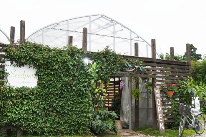 「Seedpot」は茨城県のラン園の温室で開かれる雨林植物のイベント。2017年以来毎年開催され、今年で3年目。ラン園が会場となるだけに、ランはもちろん、シダやベゴニア、食虫植物や多肉植物など、ユニークな植物が集まることから、コアな植物ファンを中心に、じわじわと注目が集まっているイベントです。
