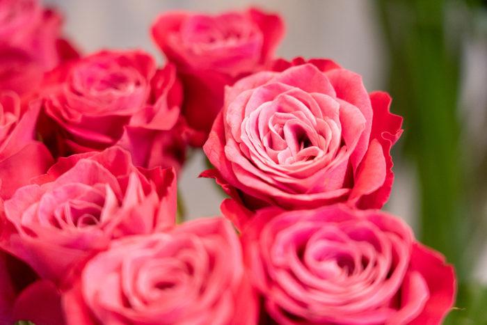 発色の良いきれいなバラ。部屋に飾るだけで華やかがムードに包まれます。