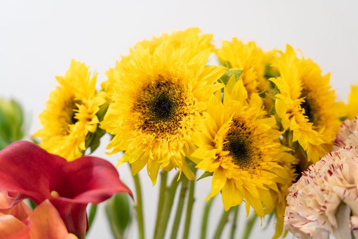 ひまわりも一輪で存在感を発揮する花。温かみのある色合いで、見ているだけで元気になれます。
