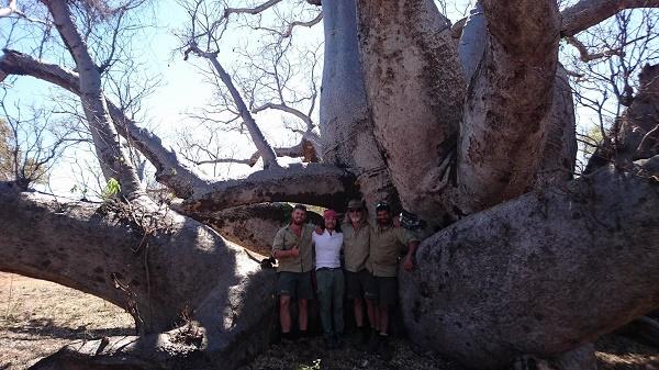 確かに大きい。カメラに入りきらないぐらいである。そしてそのあだ名の通り、幹が分かれていて、タコのようにも見える。本当にユニークなバオバブである。アフリカでもこのような姿のバオバブは見たことがない。