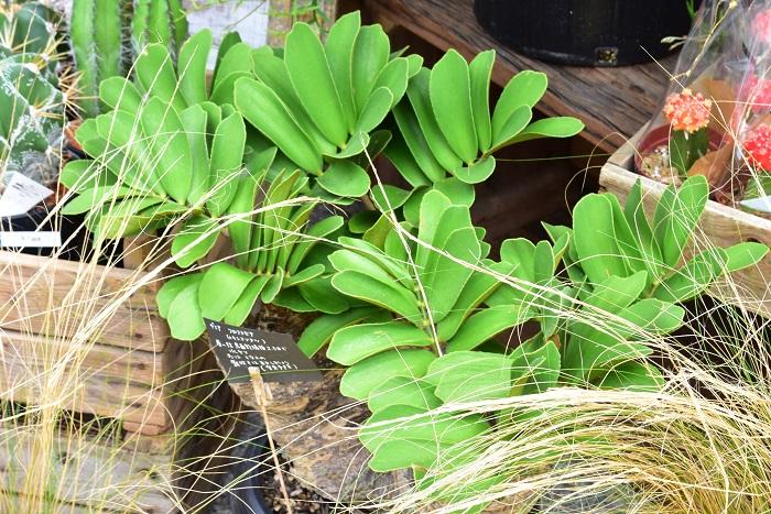 Botanical56さんのコンセプトはポップだそうです。インテリアに遊び心をプラスしてほしいという思いから、好きなものを集めてきているそうです。