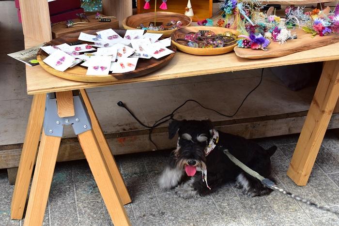 マーケットエリアはペット可だったこともあり、ワンちゃん連れのお客様多数ご来店。予想以上の快晴に恵まれた初日。ワンちゃんはguiのアクセサリー置き場の机の下で涼み中です。