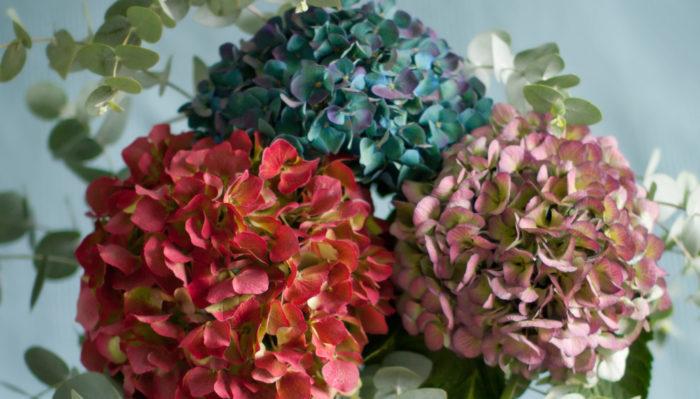 秋色アジサイとはアンティークカラーに色づいた状態のアジサイのことを言います。何色とも表現しがたい色合いがとても人気の花です。アンティークな色合いは近年はやりのドライフラワーを取り入れたブーケにもぴったりです。花合わせが難しく感じるかもしれませんが、個性を出すにはおすすめの花材です。この時期しか出会えない複雑な色味を上手に取り入れて、他とは違うオシャレな花嫁にチャレンジしてみて下さい。