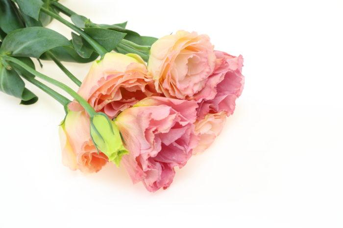 秋のトルコキキョウは深みのある色合いが特徴です。ボルドーやアプリコットの色味などが多く出回る時期でもあります。薄い花弁ですがフリルがとても豪華でバラに引けを取らない魅力があります。王道可愛いフリルの花と、少しだけ秋めいたトルコキキョウの色味で季節感を楽しんでください。花の形や質感は元々柔らかな雰囲気を持っているので、豪華なプリンセスラインのドレスやAラインドレスに合わせやすい花材です。