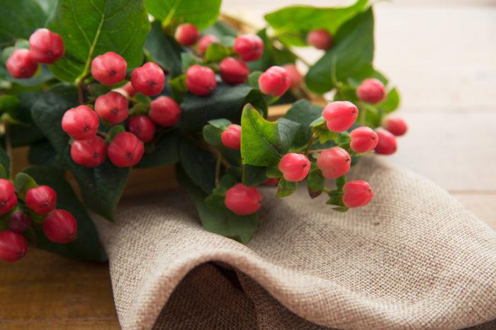 実物として人気の花材のヒペリカム、赤やピンク、グリーンなどの色味があります。切り花の実物として人気のヒペリカム、小さな実が集まった姿はどんなシーンにも合わせやすいです。可愛いブーケから落ち着いたブーケ、洋風はもちろん和風のブーケにも活躍します。