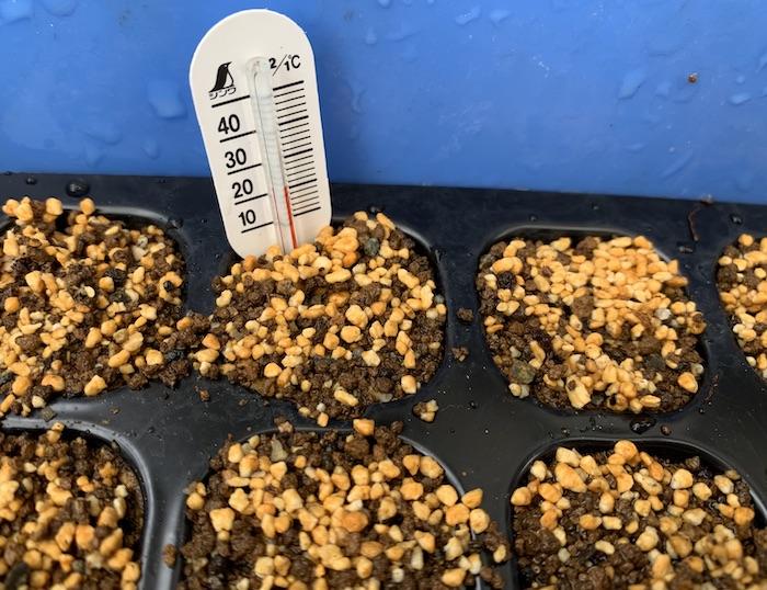 セルトレイ、育苗、エディブルガーデン、地温計、種まき