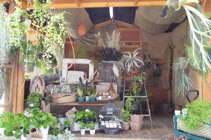 横須賀田浦から出店してきているgröna tred(グレナ トレド)さんのおすすめは、吊るしもの。吊るして飾るタイプの植物は女性から人気が高いのだそう。店内所狭しとディスキディアやエスキナンサスなどの吊るしものが豊富にディスプレイされていました。