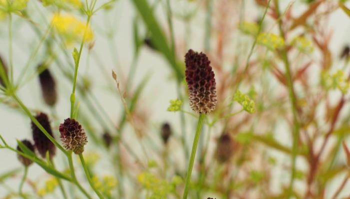 あずき色の小さな楕円形の花をつけるワレモコウ。小花としてブーケに取り入れやすく秋にピッタリの色味でアクセントとしても活躍します。乾燥したような花の質感がブーケ全体にナチュラル感をプラスしてくれます。草花系の花を集めてざっくりクラッチにすれば秋のナチュラルブーケとして活躍します。