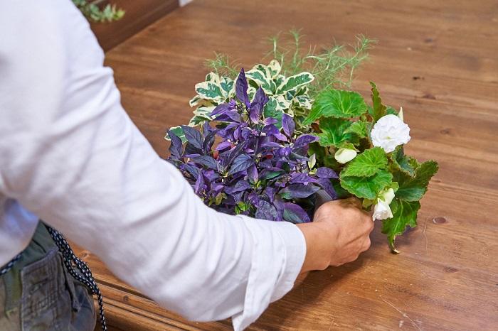 3ポットで寄せ植えを作るイメージは広がりましたか?ぜひ、気に入った3ポットの組み合わせを見つけて寄せ植えを作ってみて下さい。見た目の好みとともに、日当たりなどの好きな環境が似ている植物を組み合わせることも忘れずにチェックしてくださいね。