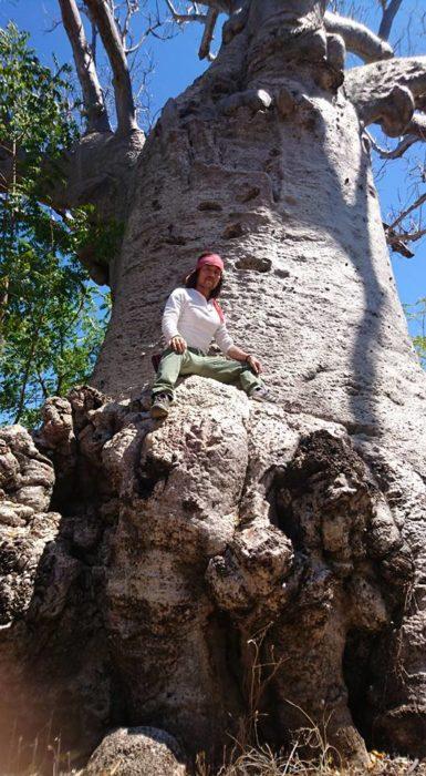 しばらくバオバブの姿に心奪われ、見とれているとJoe氏が私に登ってみないか?と声をかけ、いつものようにきちんと敬意をはらい、登らせていただいた。ただ私にとっては登ったというより、抱かれたという感じがした。