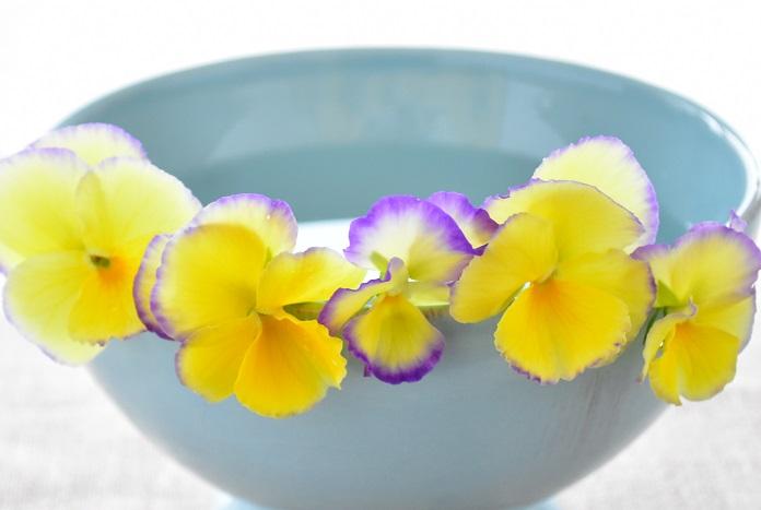 育てることに慣れてきたら、交配して自分好みのビオラを作ることもできます。最近は個人の育種家さんが作ったビオラも流通していて人気となっています。色、咲き方、大きさ、こだわりが出てきたら自分で交配してみませんか?