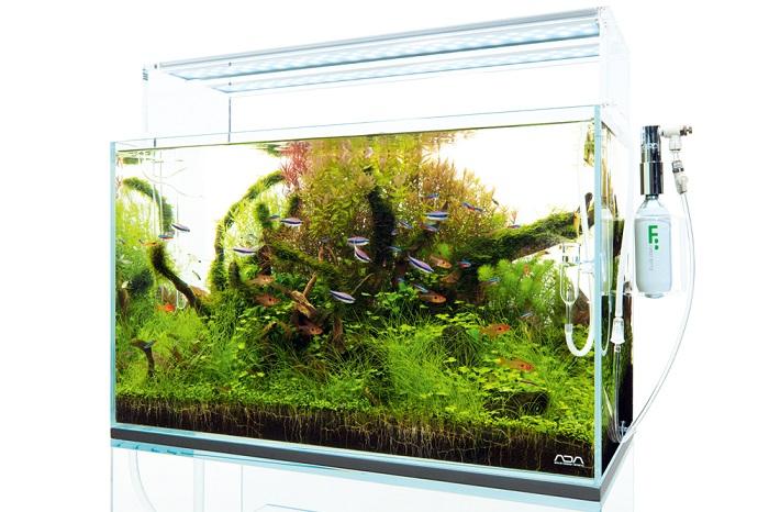 照明やCO2システム、フィルターなどの器具を取り付けて管理をしていくことで、水草がどんどん生長していきます。水草が生い茂り、魚たちが生活をし始めると水槽の中に小さな生態系ができあがっていきます。