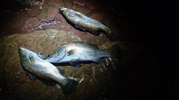 例えば釣り。この地域では有名な魚であるバラマンディーが棲んでいる。実際夜に何度かパートナーの息子たちと出かけたこともある。