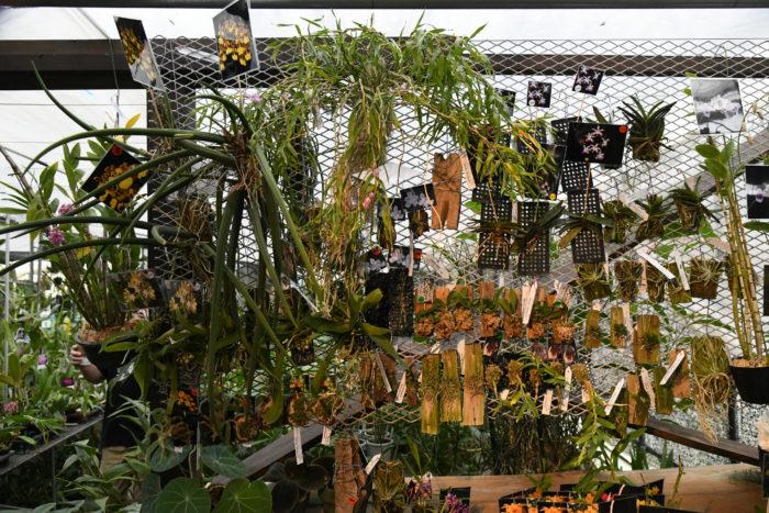 Seedpotはランを中心に扱うお店ですが、パルダリウム向けの資材や苔テラリウムなど、最近人気のインドア園芸も扱っています。  また、今回のような年に数回行われる販売イベントでは様々な出店者が集まり、なかなか手に入らない植物にも出会えます。