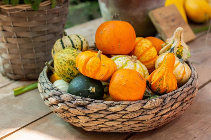 ハロウィンで飾ったカボチャは飾り終わった後もアイデア次第で楽しむことができます。くり抜いたカボチャは鉢カバーや植木鉢の代わりに使用したり、多肉植物を寄せ植えしても素敵です。  飾ったカボチャの捨て方や保存方法は? ハロウィンで飾ったカボチャの処分方法はどうしたらいいのか?迷った事はありませんか?  スーパーの野菜売り場にハロウィンの季節に出回るカボチャは食べることが出来るカボチャです。食用のカボチャはその処分方法も食べる事が一番良いのですが、一方、花屋さんで売っているカボチャは観賞用に栽培され、使用する農薬基準も食用より規制されていないことが多いので食べることはおすすめしません。  また、ハロウィン用に工作したり、飾っているうちにカビが生えてしまったり、口にするには心配な場合もあると思うので、ハロウィンで使用したカボチャは生ごみとして処分するのが一般的な捨て方です。お庭がある場合は堆肥としてお庭に埋める方法などもあります。  暮らしに合う処分方法で処分しましょう。