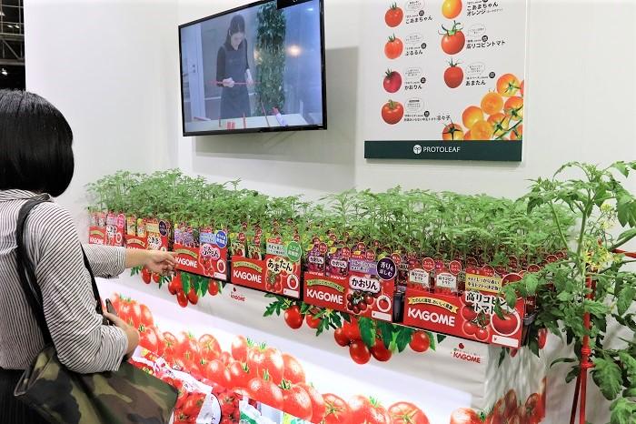 新しく「かおり」選抜品種のミニトマト「かおりん」も登場!トマト嫌いな方にもおススメの良い香りがするそうです。色もパープル系で美しく、育つ姿もオシャレなイメージで、ぜひ家庭菜園で育てて食べてみたい品種ですね。
