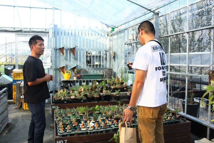 東京都で育種を行う石井さん。塊根植物や多肉植物を専門としています。植物好きの方なら関東や関西の植物イベントで一度は見かけたことがあるかも知れません。穏やかな雰囲気の石井さん、来場客の質問にも丁寧に答える姿から植物愛が滲み出ていました。そんな石井さんの植物を手に取るお客さんも自分に合う植物を吟味し、育て方をしっかり質問しながら慎重に選ばれる姿が印象的でした。