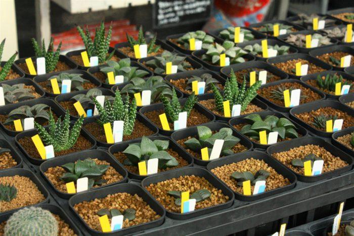 丁寧に管理された植物たち、葉の一枚一枚の肉付きが良く、とても瑞々しくツヤツヤ。様々な種類の多肉植物が並び、形や色の違いを楽しみながらどれにしようかなと選ぶのもすごくワクワクしますね。
