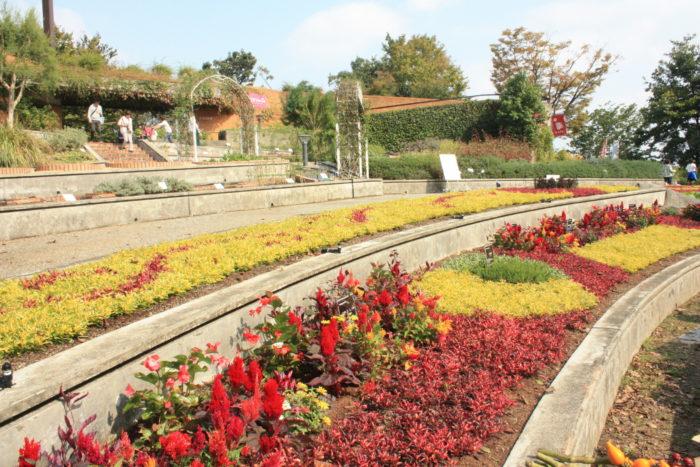 この日のために植え替えられた市民花壇。アルテルナンテラ、ベゴニアやケイトウで植栽された、秋らしい黄色と赤の配色で模様が描かれています。