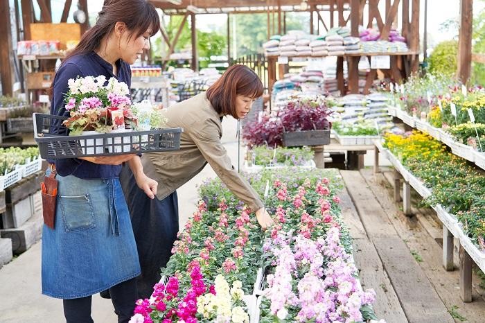 ガーデンセンターさにべるの苗売り場で、間室みどりさんに「秋から春まで楽しめる3ポットの組み合わせ」5セットを即興で教えてもらいました!5つの組み合わせをテーマに沿ってポイントを紹介していきます。