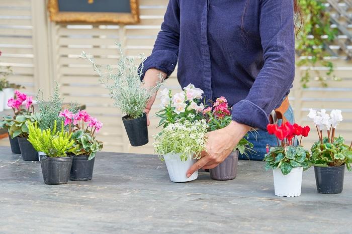 寄せ植えとは、ひとつの場所に複数の植物を植えることです。育つ環境が似ている植物を組み合わせてプランターや庭などに植えると、お気に入りの風景をつくり出すことができます。  でも、花や葉の色や形のバランスを見ながら、育つ環境が似ている植物をそろえるのは意外に難しく、慣れるまで少し大変に感じていませんか?  そこでおすすめするのが、3ポットで作る寄せ植えです。文字通り苗を3ポット組み合わせて完成させる寄せ植えなので、気軽に試して好きな組み合わせを見つけられます。  寄せ植えの基本は、線と面と点。線は葉が細いグラス類、面は大きくて丸い花や葉っぱ、点は細かい花などで表せます。線を表す植物を1つ、面を表す植物を1つ、点を表す植物を1つの合計3ポットを合わせると、形の変化が出て互いが引き立てられ、自然と美しい寄せ植えになります。さらに、背が高いもの、中くらいのもの、低いものを組み合わせて変化を出すとバランスが良くなります。  このように、花苗3ポットを組み合わせるだけで、十分に寄せ植えを楽しむことができるんです。