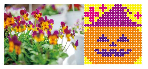 愛知県では10/19(土),20(日)の2日間、安城市の市立公園「デンパーク」で、お花のワークショップを開催します。注目は、みんなで作るハロウィン花壇! 来場者にビオラの寄せ植えを作ってもらい、それを並べてハロウィンの象徴である、大きなジャック・オー・ランタンの花壇をつくっていく楽しい試み。オレンジやイエローなどビオラならではの多彩な花色を活かした参加型のイベントです。各日先着250名、合計500名規模で作り上げるハロウィン花壇に参加してみませんか?