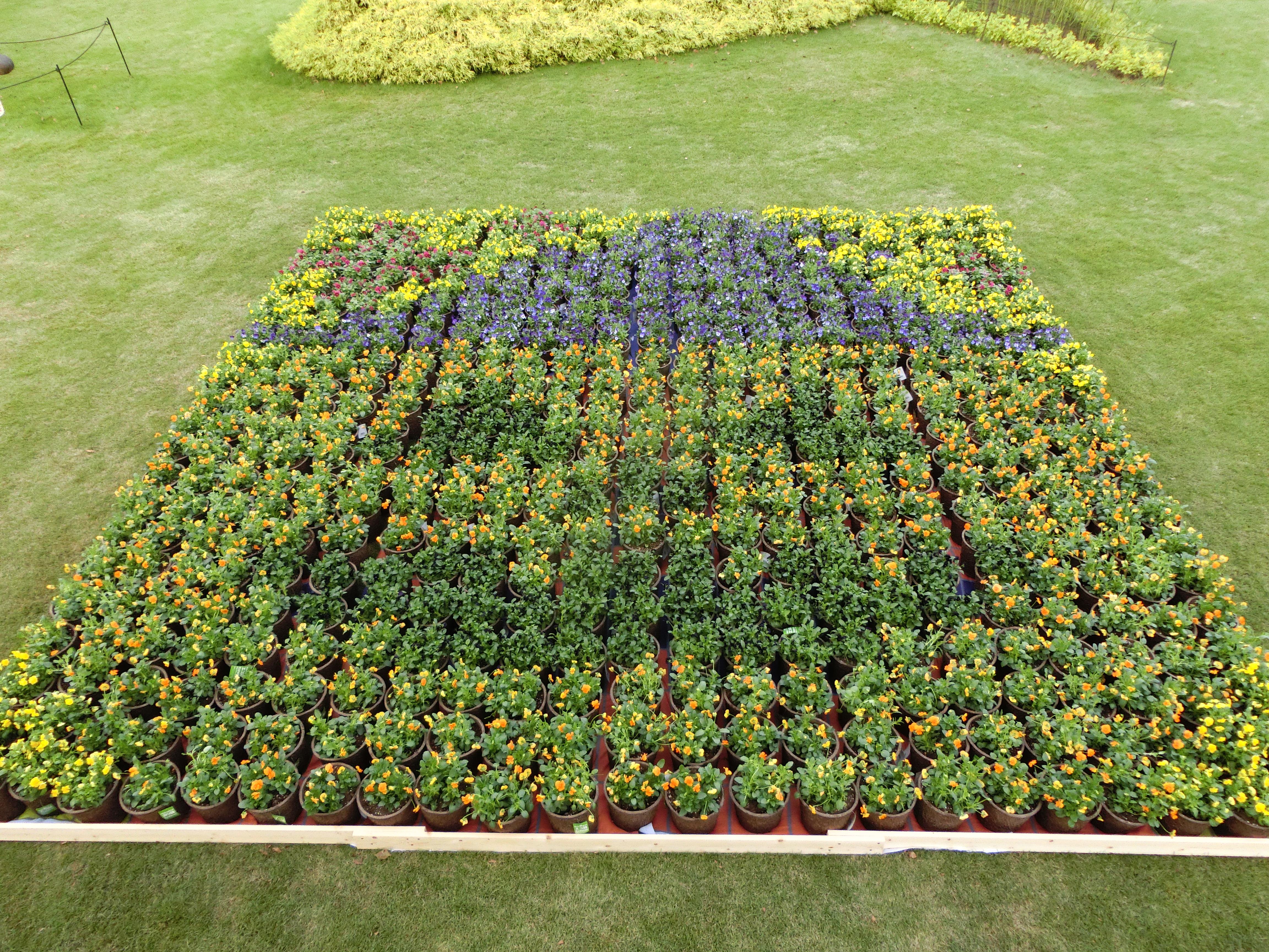 初日は雨だったので人出が少なく「本当に完成するのだろうか?」と心配でしたが、2日目には晴れて来場者も大幅アップ!  見事巻き返し、巨大ハロウィン花壇が出来上がりました。この花壇は10月31日までデンパーク内に設置されていました。
