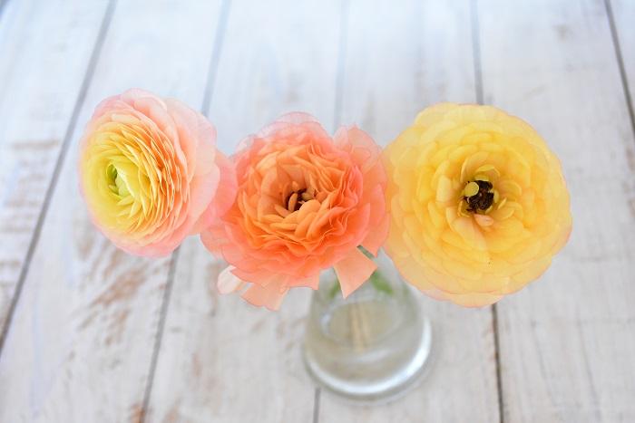 ラナンキュラスはアネモネと同じくキンポウゲ科の球根植物です。バラを思わせるような幾重にも花びらを重ねた美しい花を咲かせます。ラナンキュラスも春にしか会えない花です。