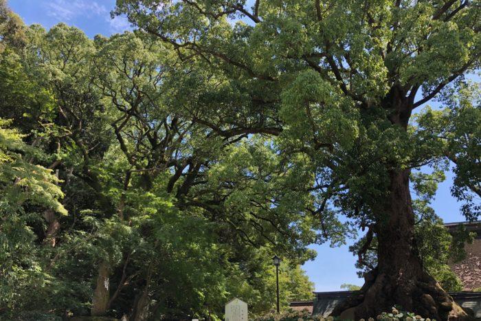 ▲学問の神様で有名な太宰府天満宮の裏には樹齢1000~1500年ともいわれる国指定の天然記念物も見られます  街中の花だけでなく、繁華街から地下鉄で数分程行くと、福岡市民の憩いの場である大濠公園や、車で数十分行くと様々な緑豊かな市や町を訪れることができます。花や緑を楽しむスポットはもちろん、福岡県内には全国でも有名なホームセンターや、ファンから熱い視線を浴びている注目の園芸店などもあります。そんな花・植物の小売りを支える園芸苗や切り花の産地が福岡には沢山あるんです。その花農家により丁寧に作られる植物はどれも美しく仕立てられた高品質のものばかり。福岡県民でもあまり知る人は少ないかもしれませんが、実は福岡県の花の生産量は全国でも3位の生産量を誇る花づくりも盛んな都市なのです。※1 そんな花や植物とつながりが深い福岡の魅力をご紹介していきます。  ※1:花き産業振興総合調査 確報 平成29年花木等生産状況調査 による