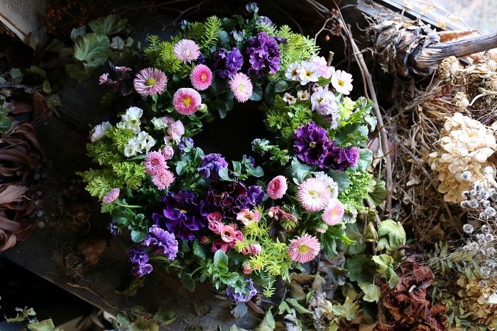 春らしい優しいピンクのデージー(デイジー)を主役に、ゴージャスな印象の濃い赤紫色のフリル咲きパンジーを合わせてリース型のバスケットに寄せ植えしました。リーフ類は、黄緑色のセダムなどを合わせることでリース全体を鮮やかな印象にしています。