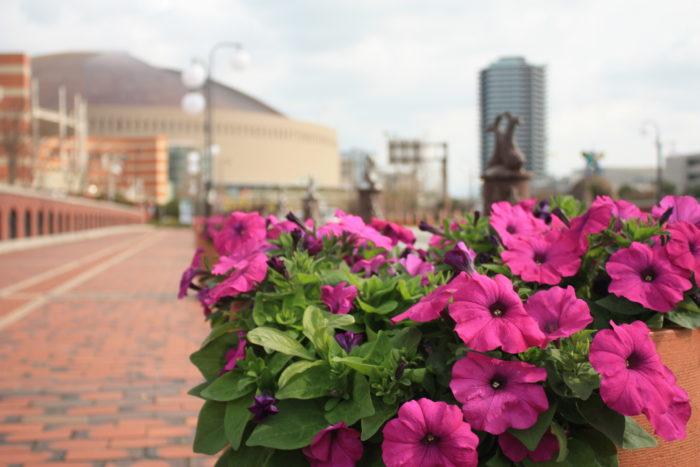 福岡市内各地に一人一花の花壇やフラワーポットがあります  ぜひ、一人一花運動で作られた花壇を見てみてください! 一人一花運動で彩られた花壇は、地域住民だけでなく福岡市に訪れた人にも、おもてなしとして喜ばれています。その一人一花運動の花壇はどこにあるのか、すべてまとめて見ることができるんです!  福岡の玄関口、博多駅前の大博通りと住吉通りから、中心地の天神へ向かう明治通りと渡辺通りまでの主要な道路には沢山のスポンサー花壇があります。スポンサー花壇も沢山あるのですが、それ以上に多くの数のボランティア花壇。福岡市内の西から東へ、北から南まで、各地にボランティア花壇が見つけられます。その数、スポンサー企業で142社、ボランティア団体で187団体もの数の花壇が設置されています!※2 地図上に示されるとその量は圧巻。こんなにも沢山の場所で沢山の方々がまちづくりに参加しているんですね。その花壇の量の多さ、是非ひと目見てみて下さい。  ※2 2019年12月時点の情報です。