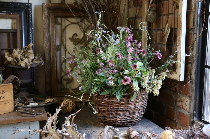 背丈があって動きのある水色のサルビア・アズレアや、ピンク色の花穂を立ち上げるヘミジギアで全体のアウトラインを構成。ガイラルディアやハシカンボクを中央手前に配置して視線を集めるフォーカルポイントに。自然な野趣あふれる寄せ植えです。
