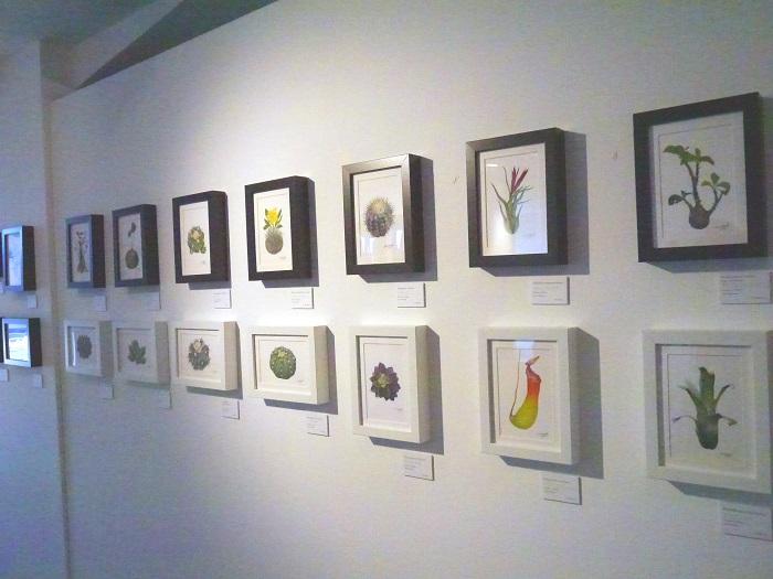 ボタニカルアートのSaori Ohwadaさんです。小さな絵がずらりと壁にならんでいる様子は、本物の植物とはまた違う可愛らしさ。